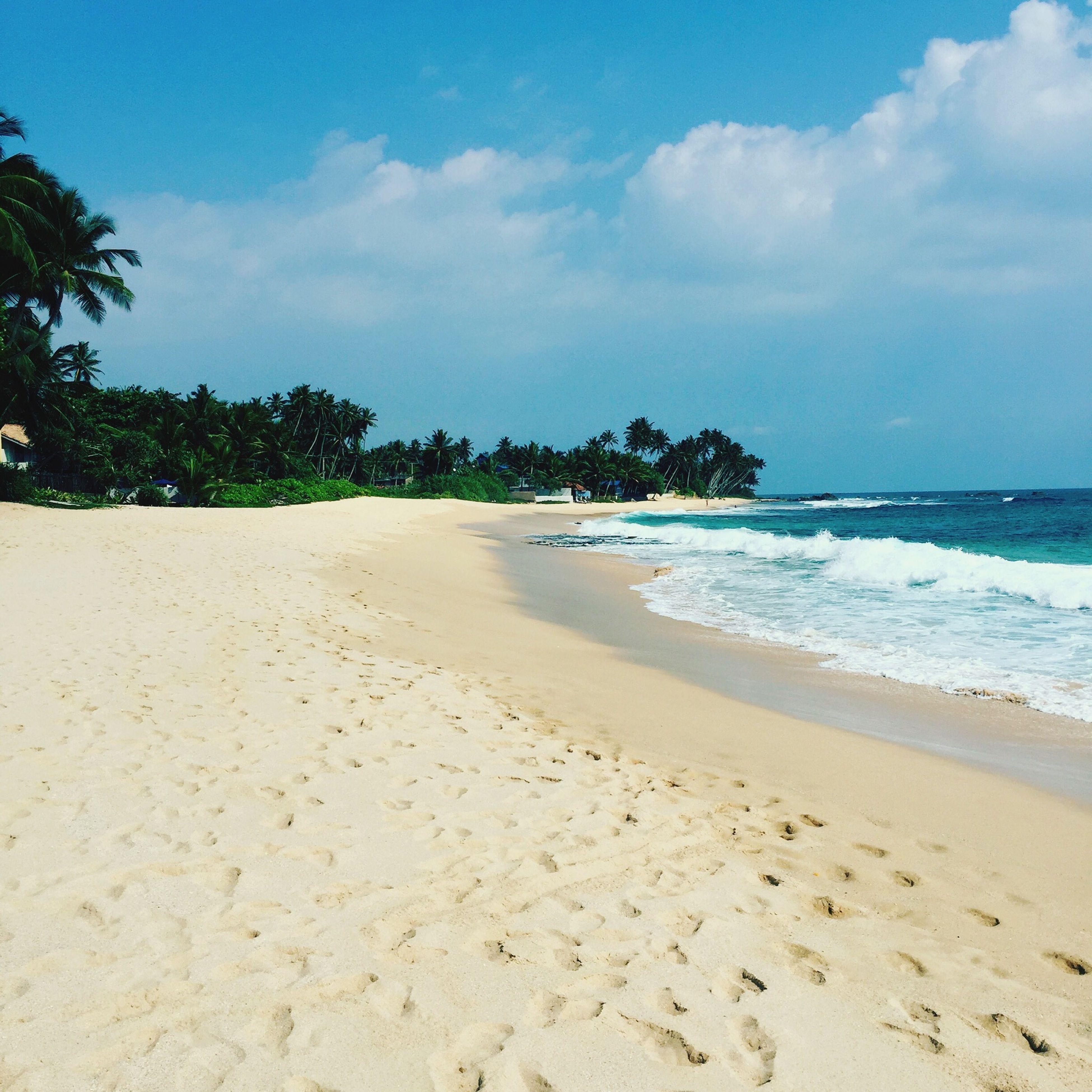 Beach Life Indian Ocean