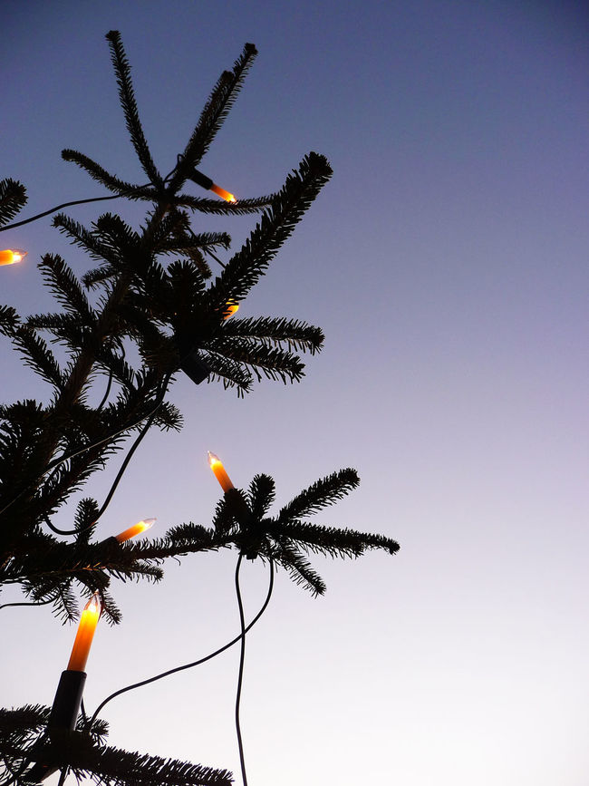 2008 Beauty In Nature Candle Christmas Christmas Decorations Christmas Lights Christmas Tree Christmastime Clear Sky Day December Freiburg German Gradation Growth Low Angle View Nature No People Outdoors Sky Tree Xmas Xmas Decorations Xmas Time Xmas Tree