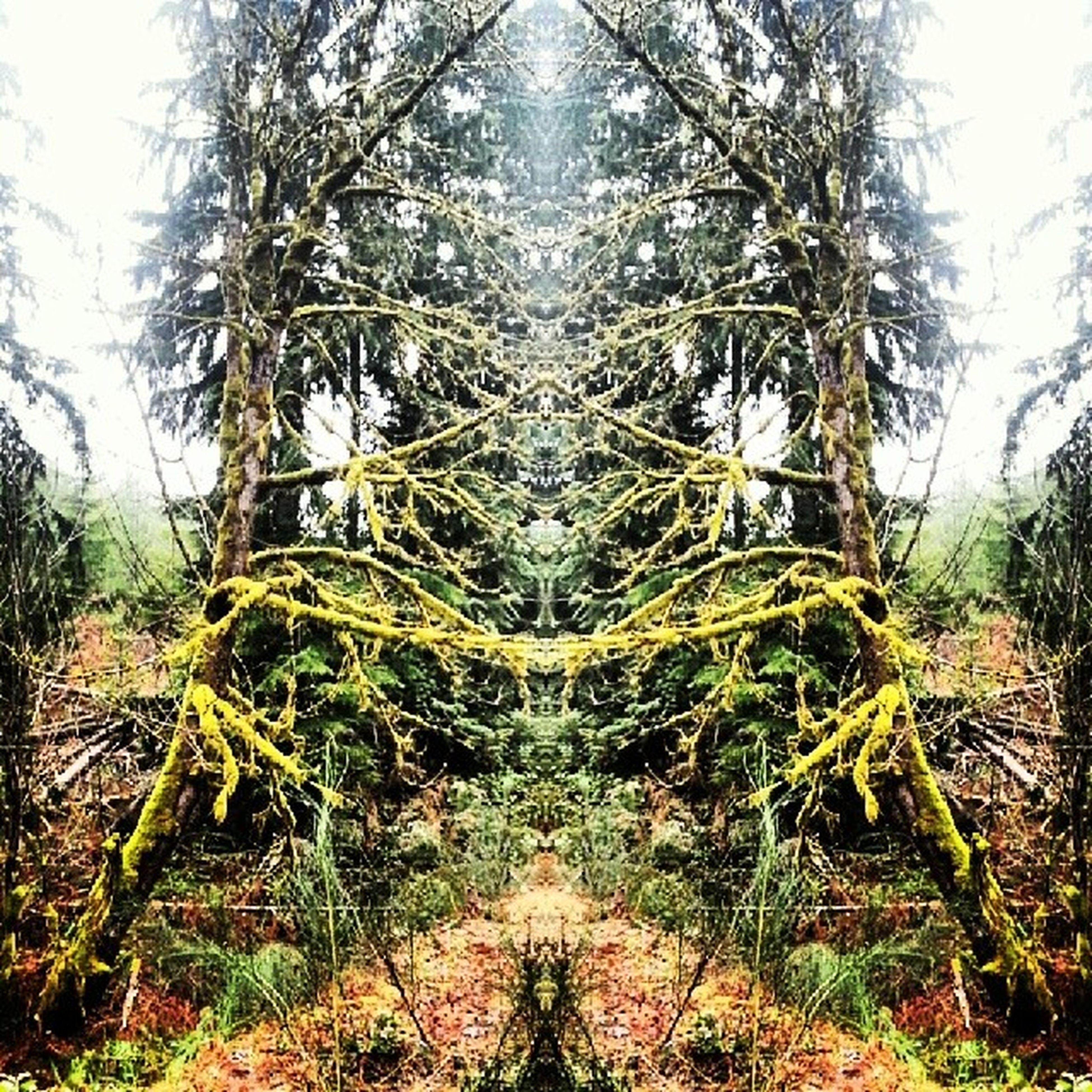 Trees ! Nature Trees Mirrored Neaturewalk