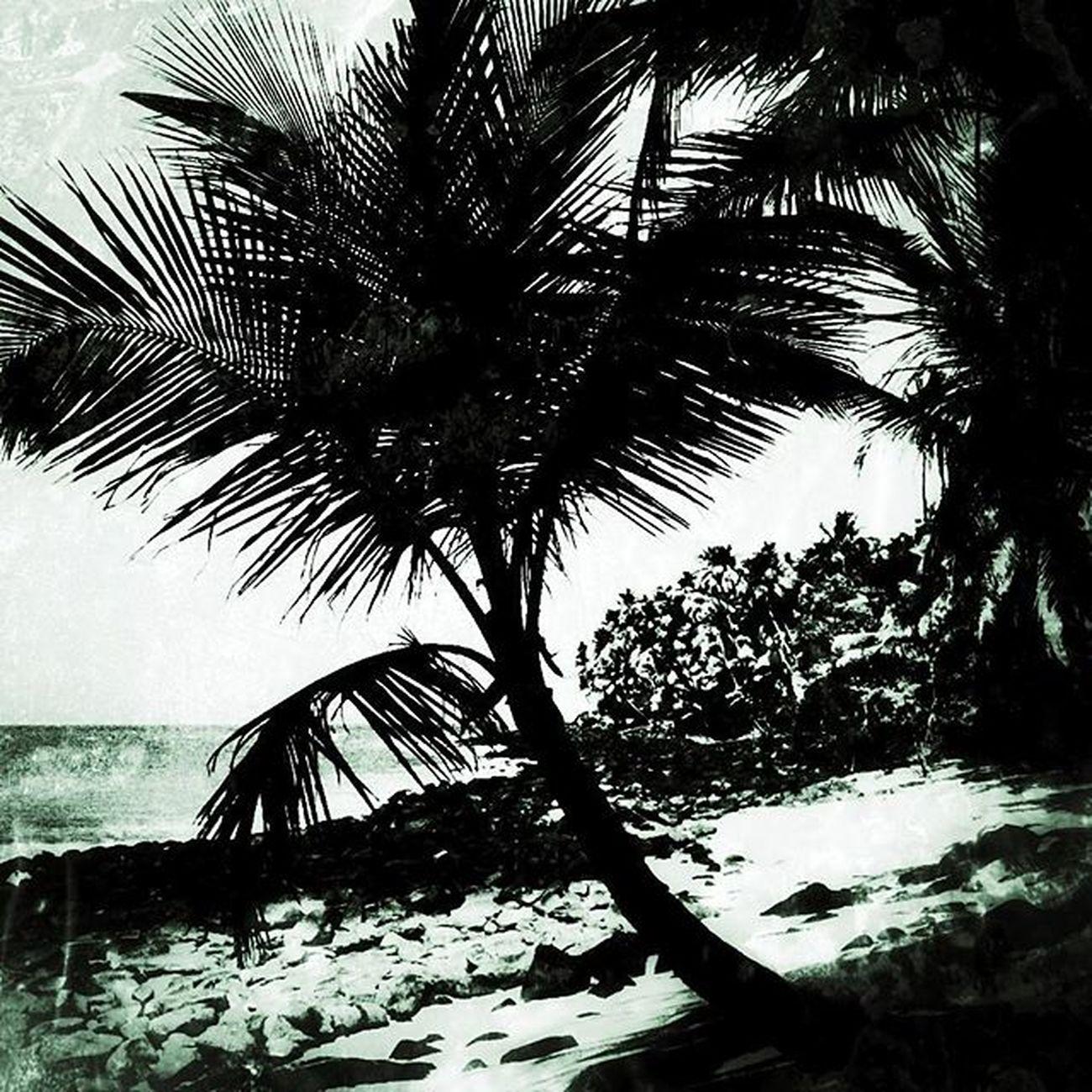 L'enfer vert 🌴🌴 Nikonfr Igersfrance Igersguyane Igersamazonia Amazonie Guyana Island Papillon Bagne Ilesdusalut Ig_worldclub Ig_europe Ig_great_pics IGDaily Igersoftheday Igaddict Super_france Jaimelafrance Topfrancephoto Bnw_society Bnw_life Bnw_captures Belambrawards Devilisland