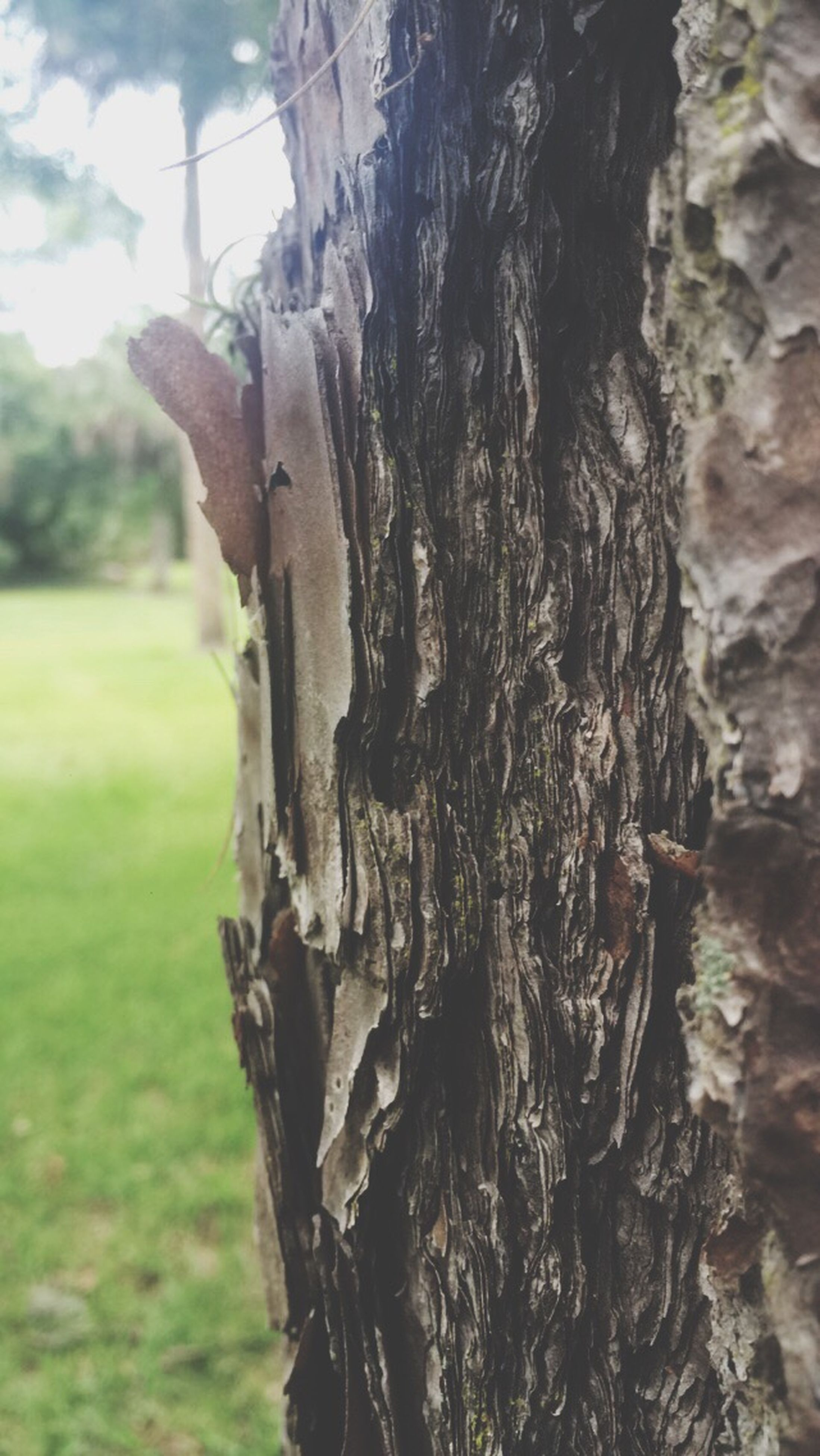 tree trunk, tree, focus on foreground, close-up, textured, growth, nature, wood - material, bark, day, outdoors, tranquility, dead plant, no people, sky, field, branch, rough, plant, sunlight