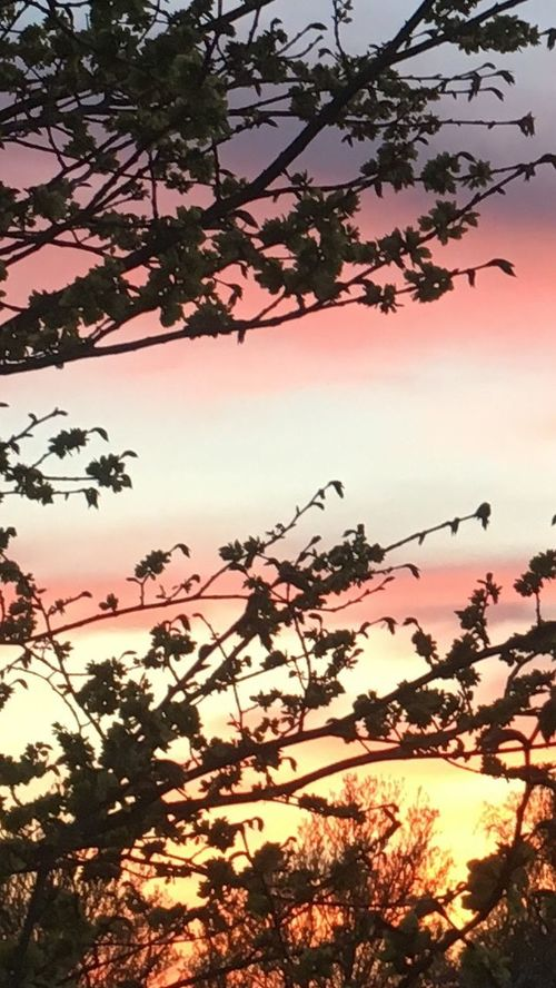Sunset Beauty In Nature Sky Pink Sky Nature Beautifull Sunset Sunset My Wiew Tree Evening Sky Look Out The Window