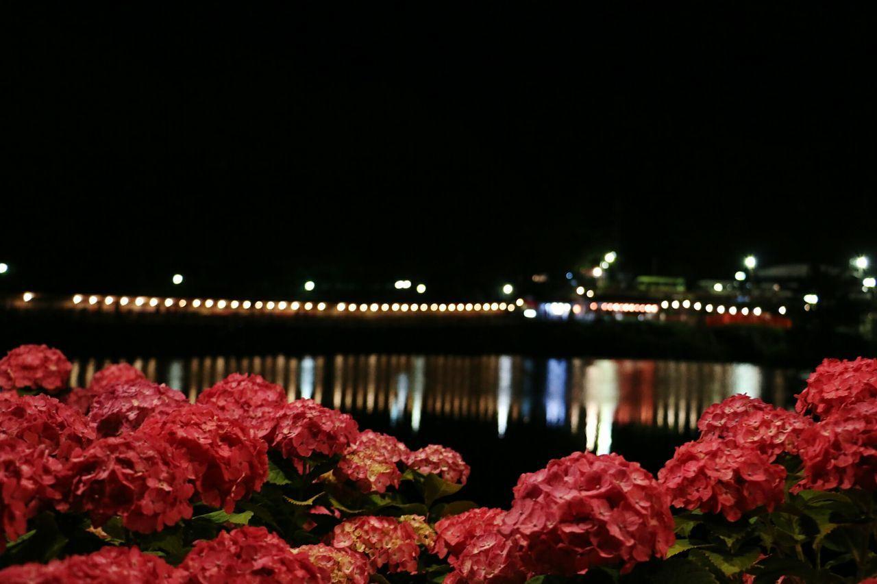 紫陽花の花言葉…ピンク、赤紫色は『元気な女性』 あじさいの里 紫陽花 Reflection Light Up Flower Enjoying Life EyeEm Gallery 写真好きな人と繋がりたい 写真撮ってる人と繋がりたい Canon 70d Aichi,japan 形原温泉