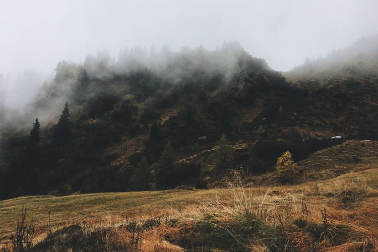 Foggy Day EyeEmPaid Nature Landscape Fog VSCO Picoftheday Vscocam Foggy Morning Foggy Day Alps Southtyrol  WeLoveNature