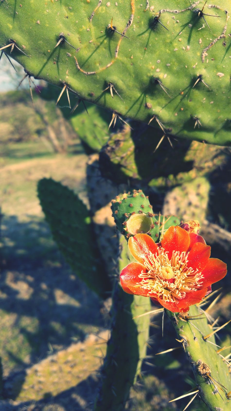 Hot Day! Excelent Day Photo♡ PhonePhotography Photography Nature I Love Nature! Cactus Flower