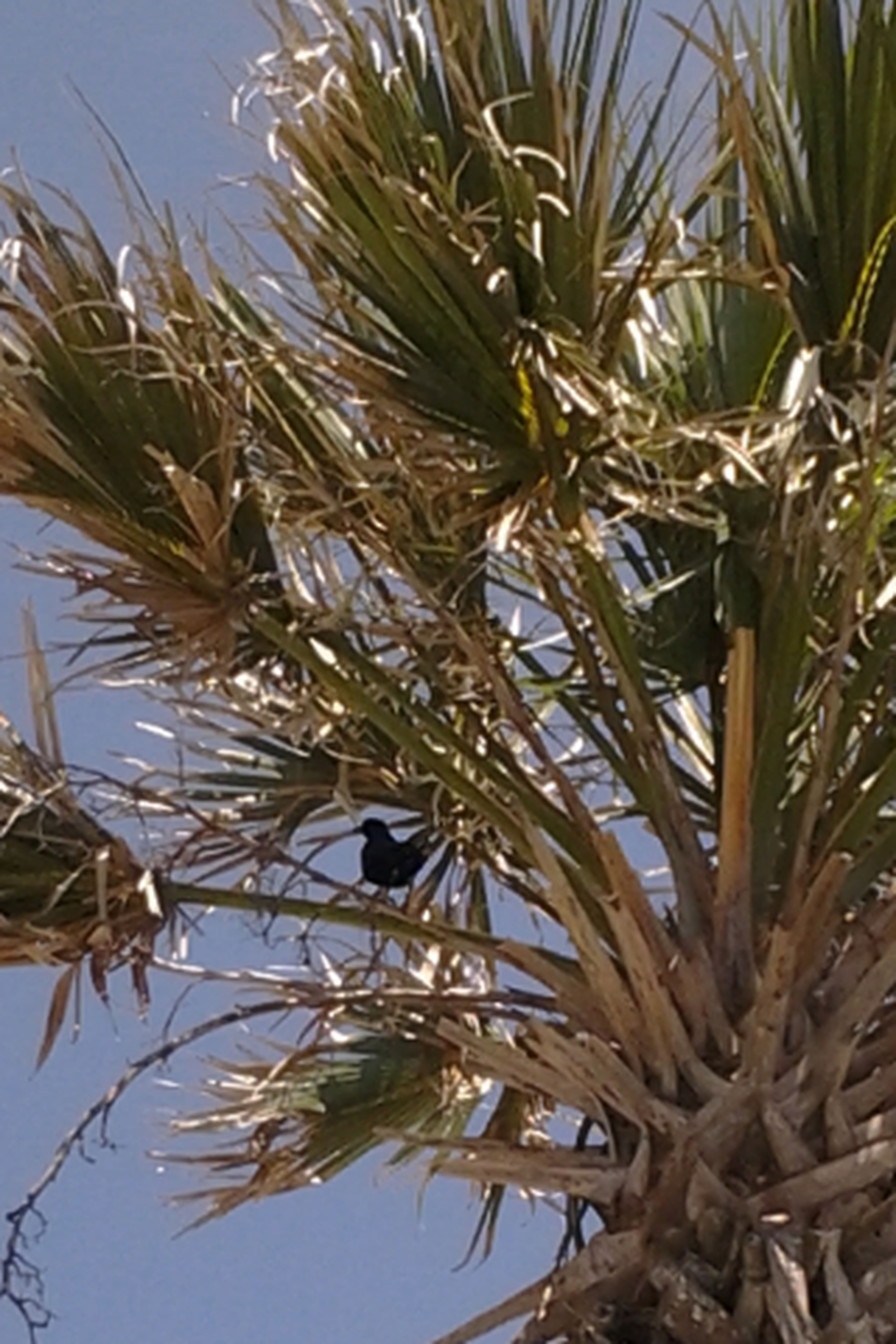 Bird In A Palm Streamzoofamily Jacksonville Beaches  Taking Photos