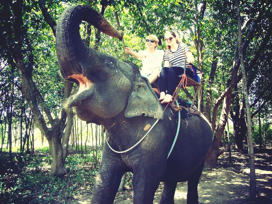 My Mom And I Thailand Jumbo