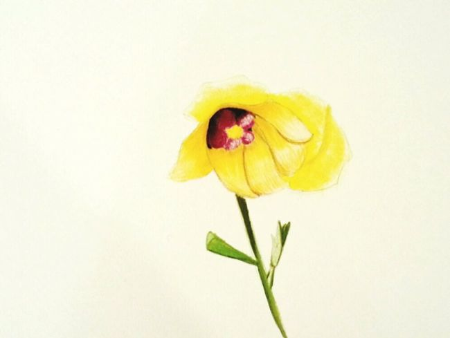 Flower Art Drawing Hibiscus Hibiscus Glaber