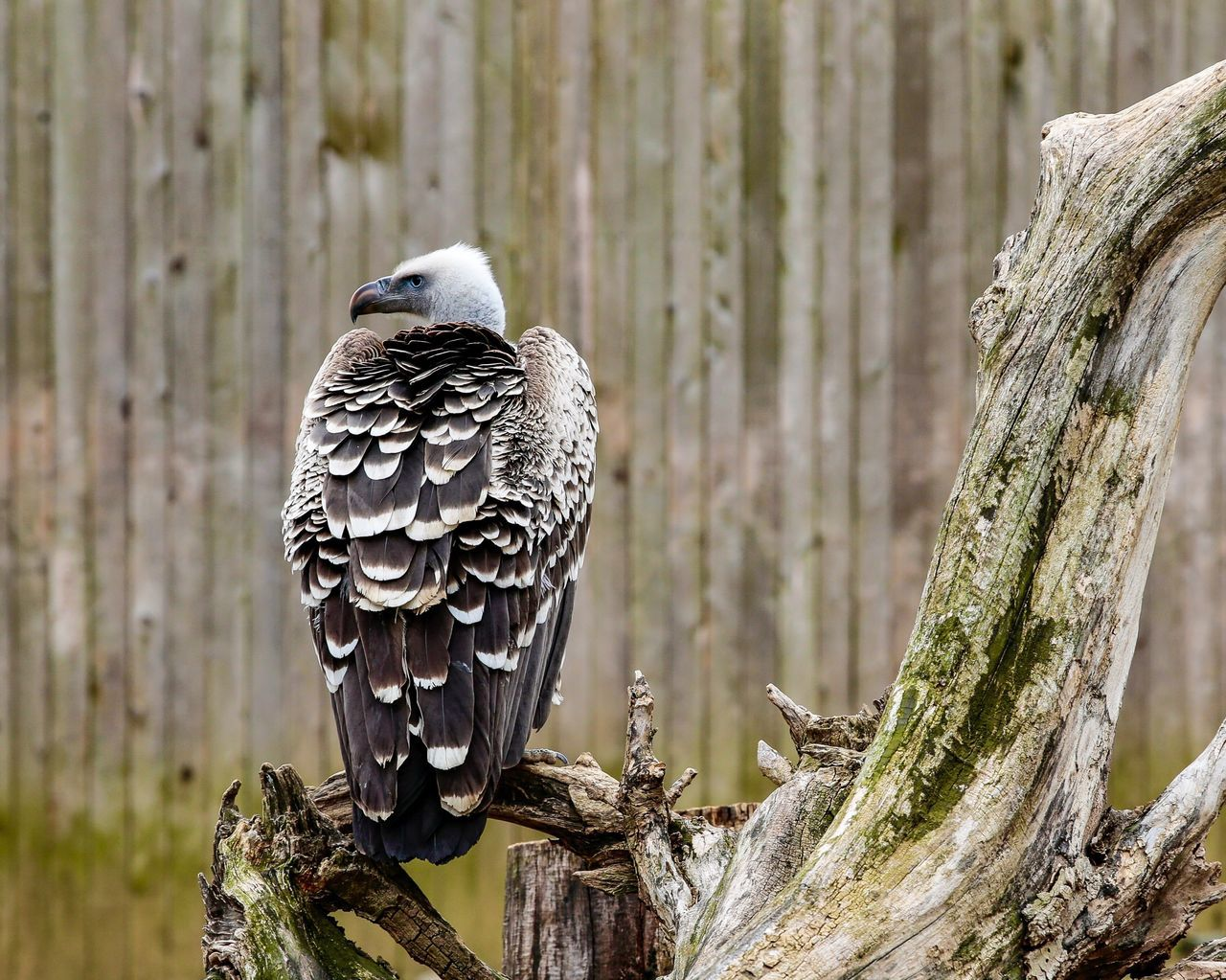 One Animal Bird Of Prey Animals In The Wild Animal Themes Bird Tree Animal Wildlife Perching Tree Trunk Branch Day Outdoors Nature No People Owl Close-up JGLowe Beauty In Nature Stare