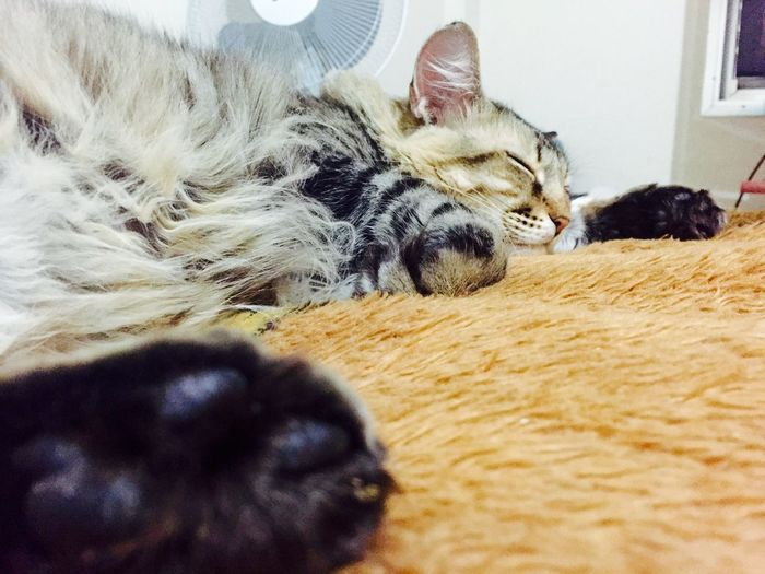 Brasil ♥ I Love My Cat Lovecats❤️ Brazil Hello World Cat Cat♡ I Love My Cats  Cats Love