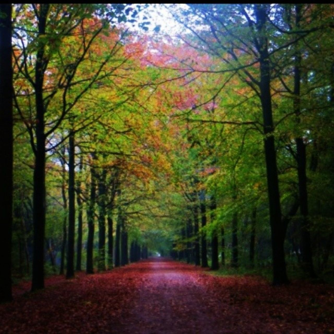 Forest Fall Autumn Colour Winter Tree Netherlands Insta_netherlands Instamood Leaves Forestbed Walkingtrail Desserted Peaceful