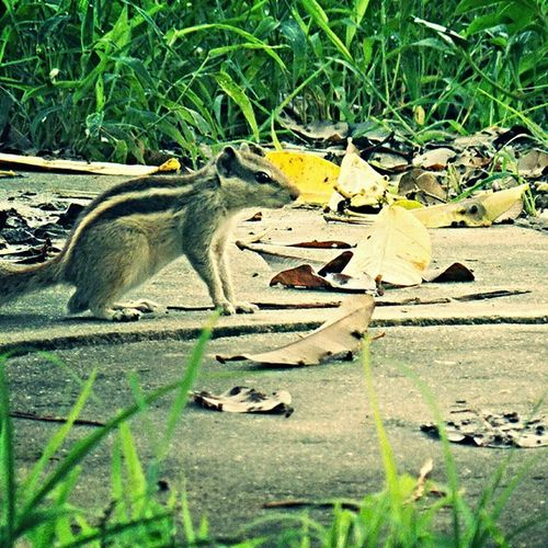 Morning Bright Squirrel Alwaysalert Timepass Myclicks Camclicks Shaukbahutbadicheezhai