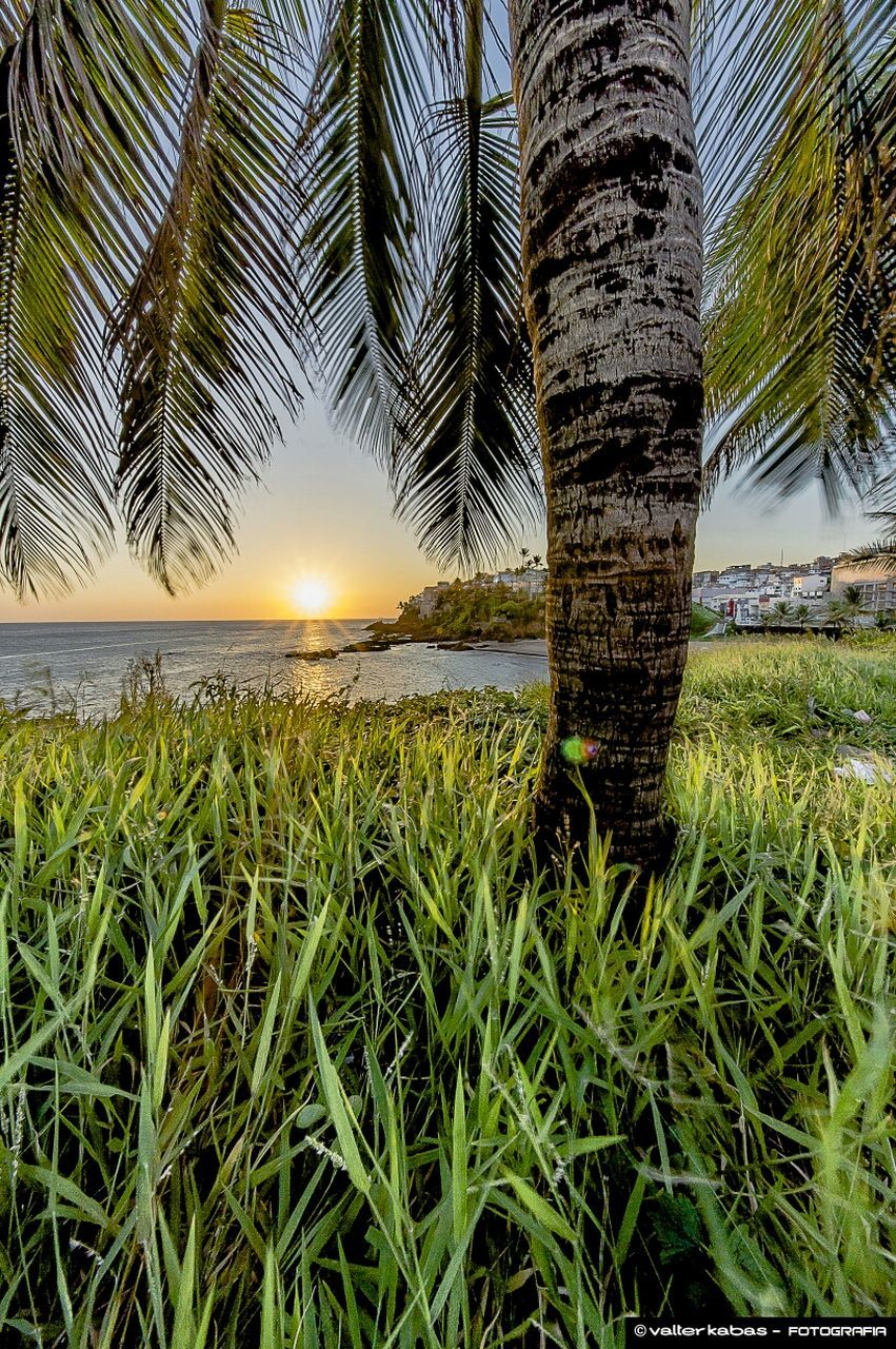 nature, sun, beauty in nature, scenics, sunset, tranquil scene, growth, tranquility, palm tree, outdoors, tree, sky, sunlight, water, no people, grass, day, tree trunk, sea, close-up