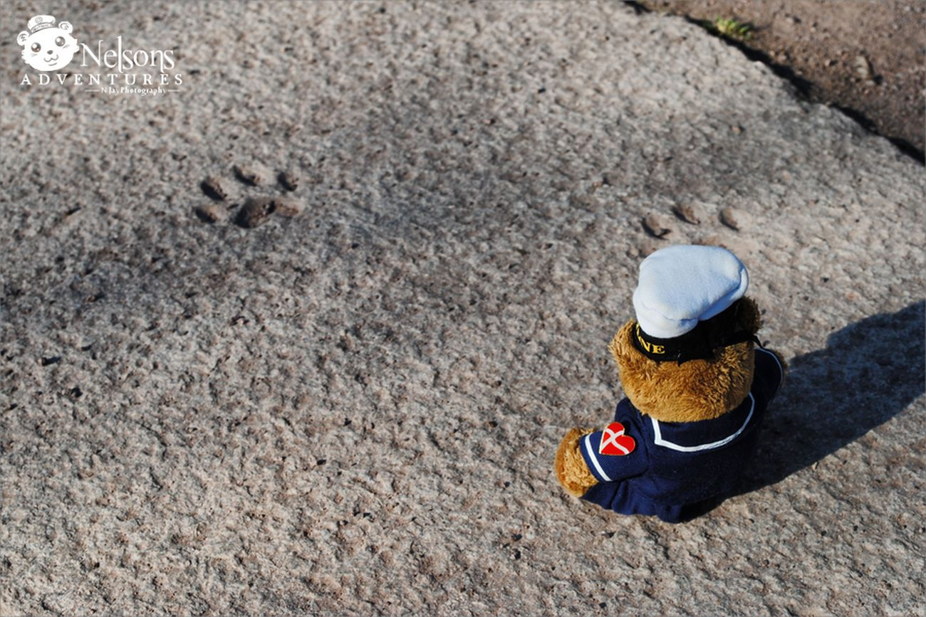 Nelson looks at animal foot prints ? NelsonsAdventures Malephotographerofthemonth Hello World Taking Photos Paws Teddy