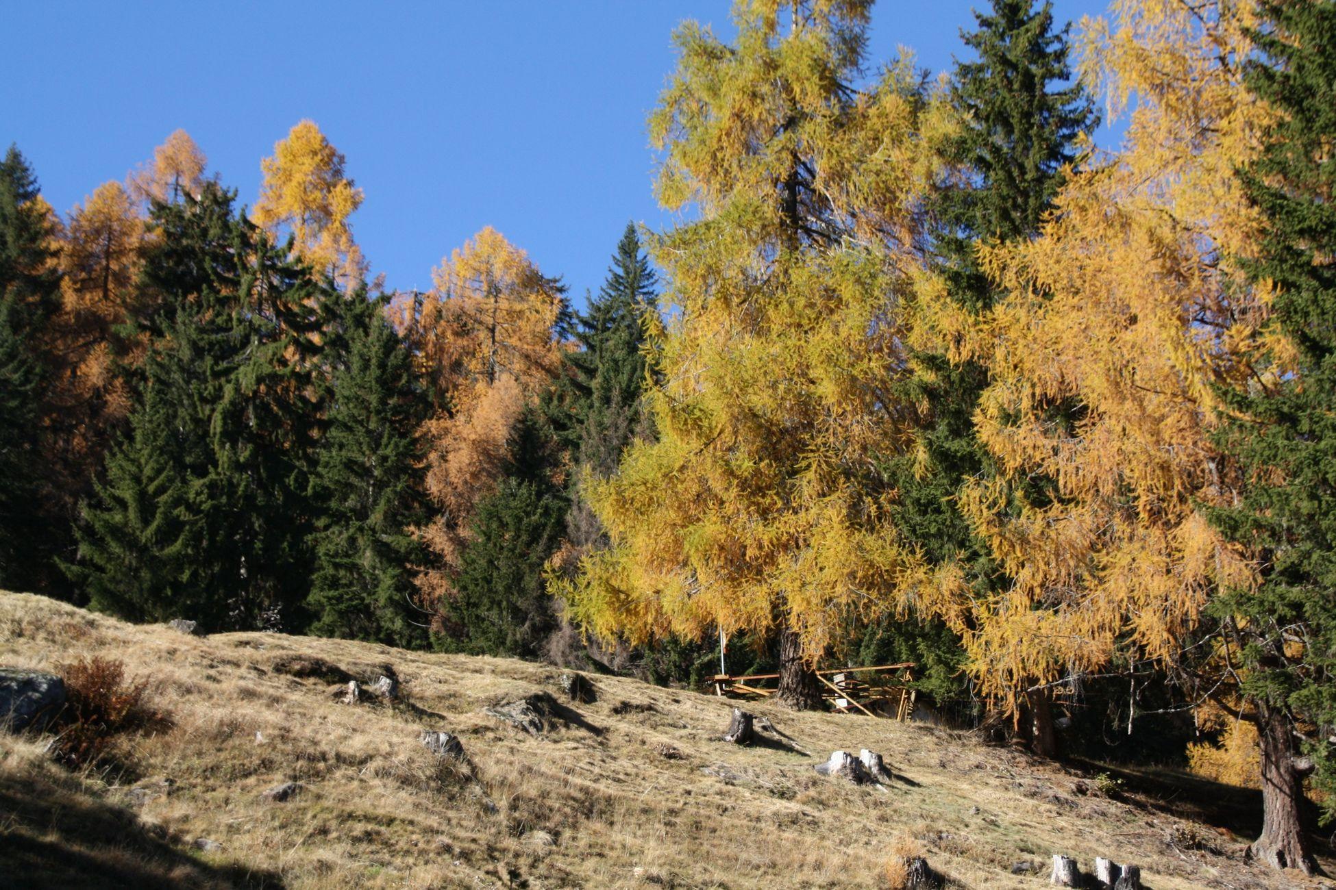 Lago Tremorgio Svizzera Sentierando Trekking Autumn Colors