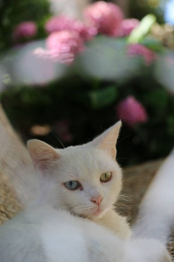 Pretty cat eyes 🐱 Blue Cat Flower Green Nature Outdoors Photography Portrait Summer