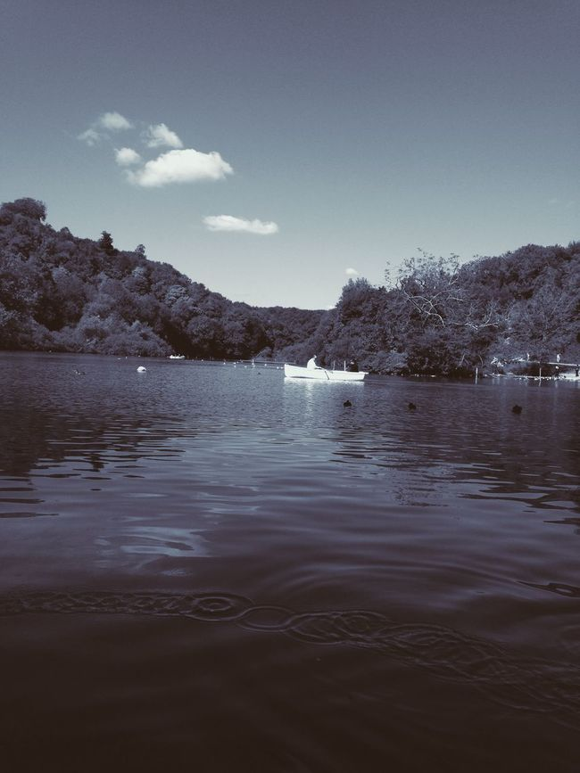 Last Weekend in beautiful Arundel Lake Nature IPhoneography