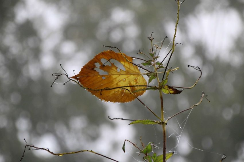 EyeEm Selects Autumn Leaf Nature No People Outdoors Day Beauty In Nature Branch Close-up Plant Photography Themes Tree Sky