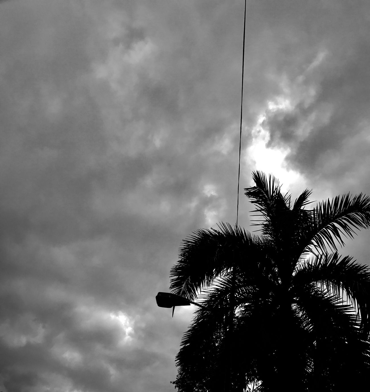 Cloud - Sky Sky Low Angle View Tree Palm Tree Outdoors Nature No People Storm Cloud Day Rain Weather Photography Tropical Climate