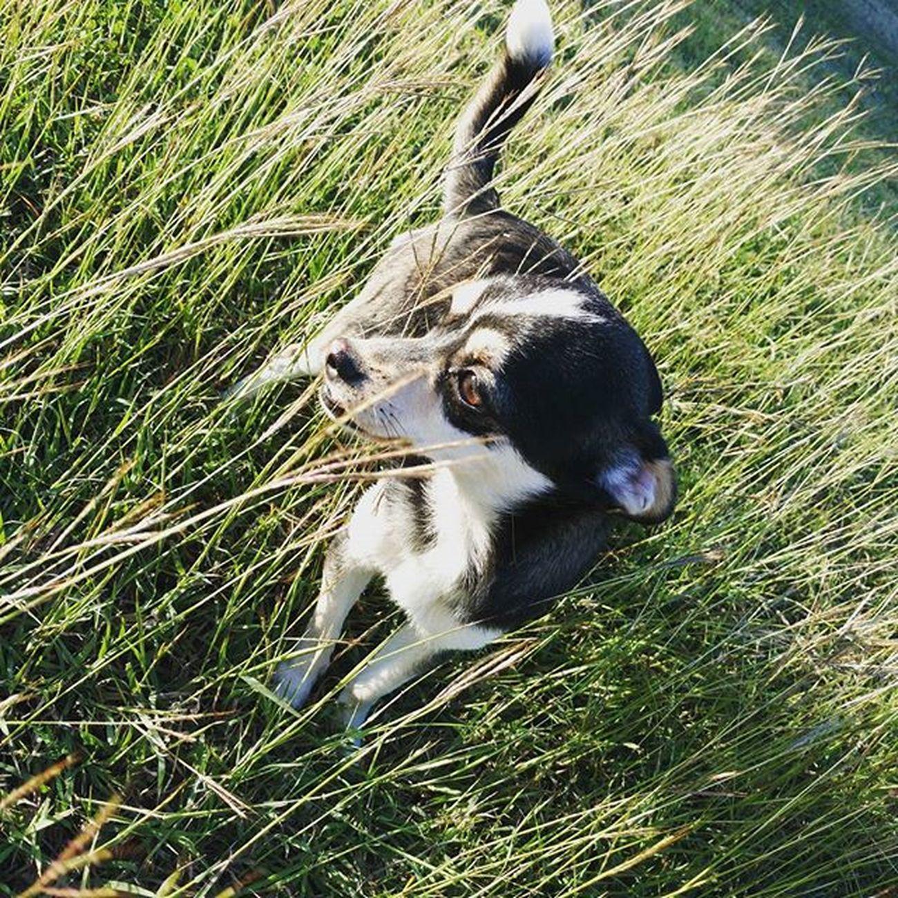 A walk with a beautiful day Dog Park Sun Rambo Happiness