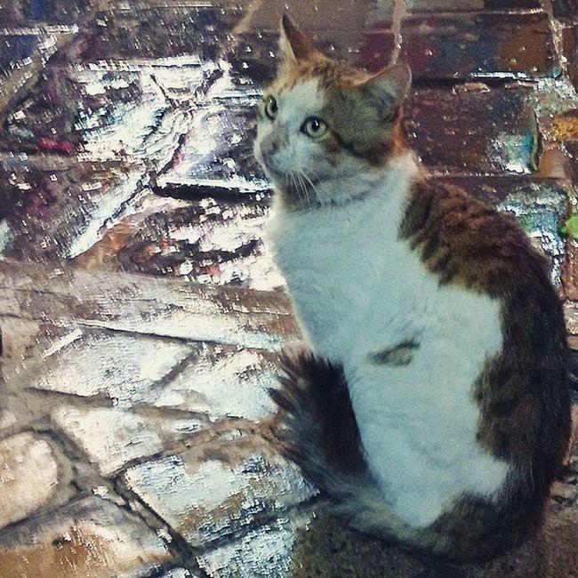 Cat Tunisia Igertunisia Rain :)