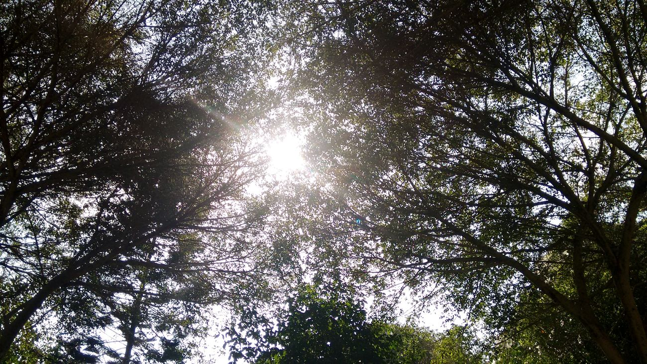 Tree Art Sunnyday Daynew