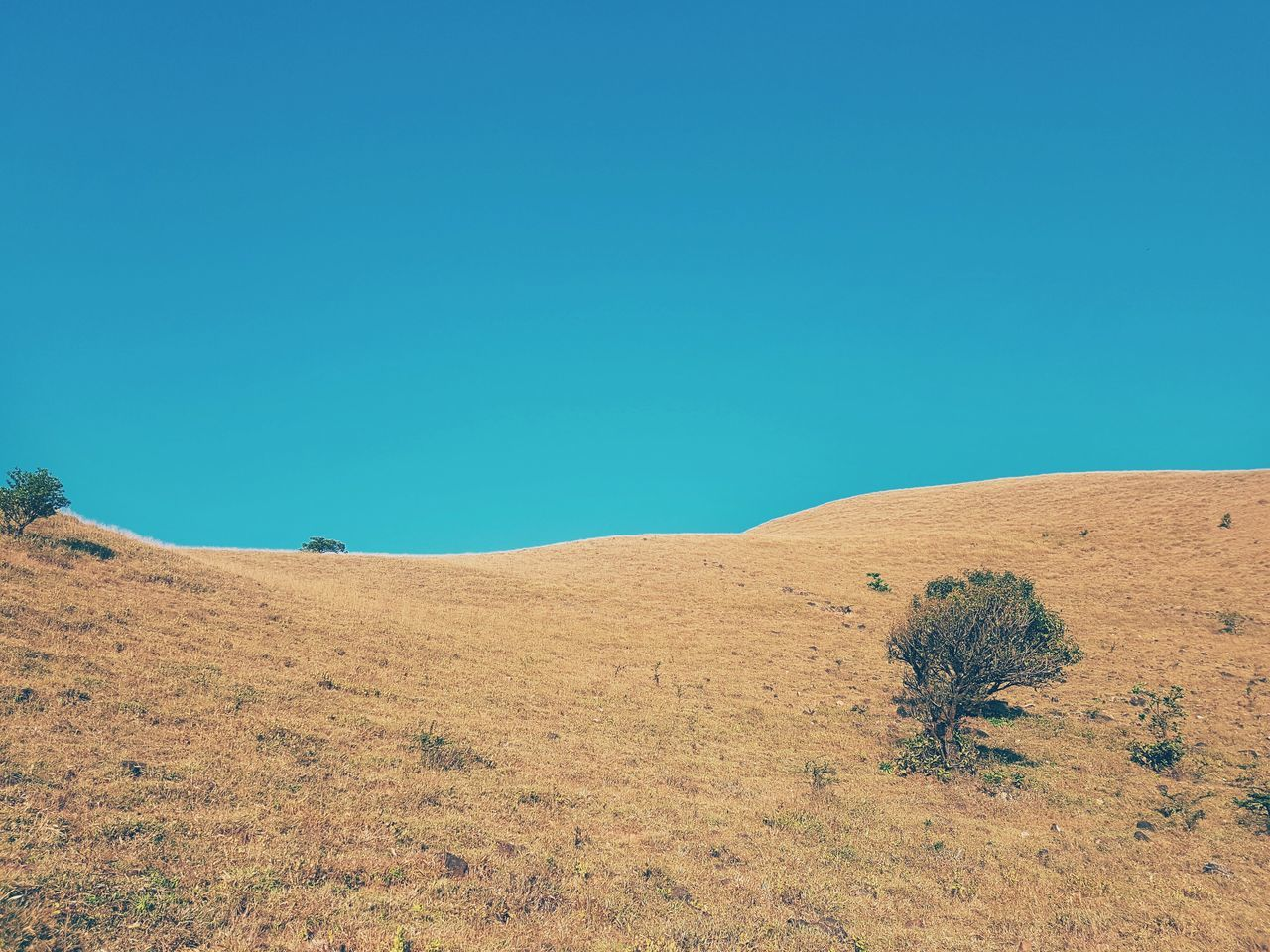 Finding New Frontiers Blue Clear Sky Sunlight Outdoors No People Sky Day Nature EyeEm Blue Skies Mobilephotography VSCO Galaxys7 India Snapseed Grasslands Grassland Tree Tones Dual