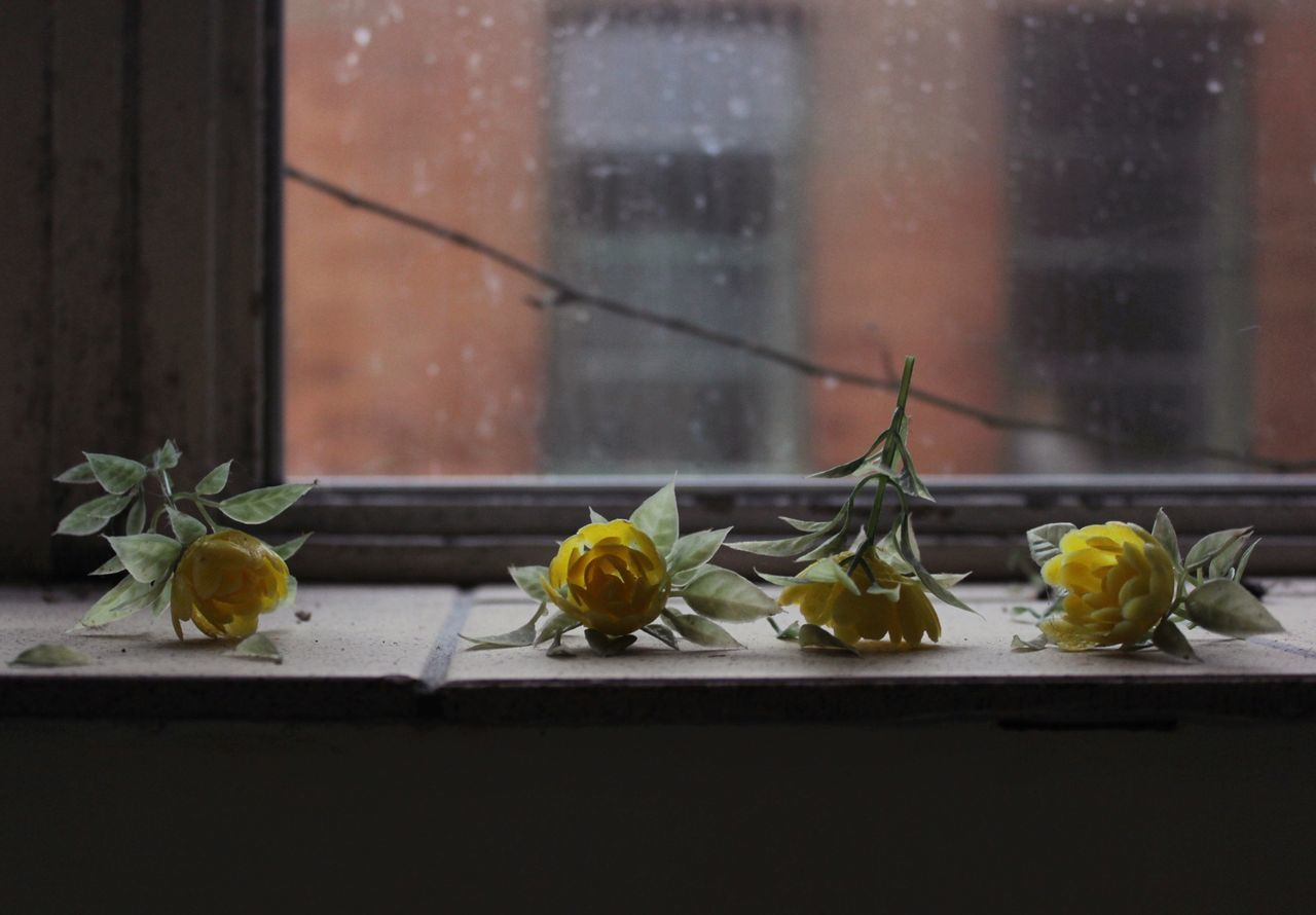 Beautiful stock photos of roses,  Day,  Decoration,  Fake,  Flower