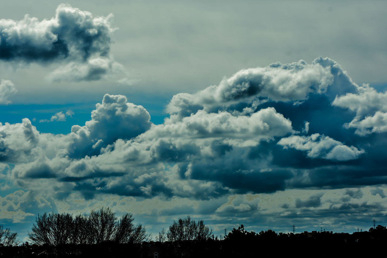Beauty In Nature Cloud - Sky Cumulus Cloud Day Low Angle View Nature No People Outdoors Scenics Sky Tree Treetop