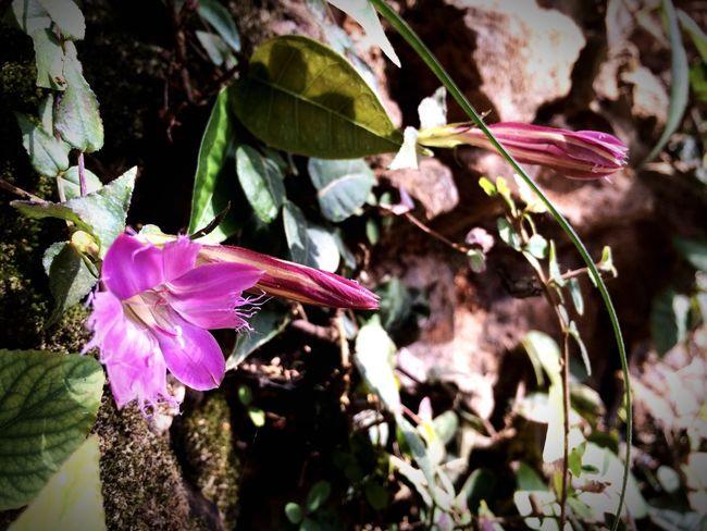 石缝里的花