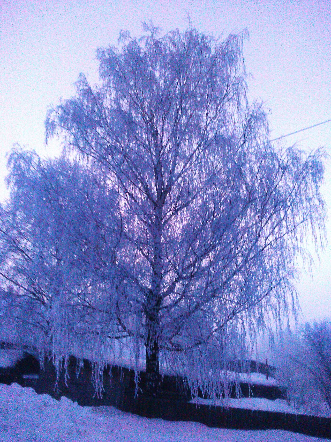 Tree утро Morning First Eyeem Photo