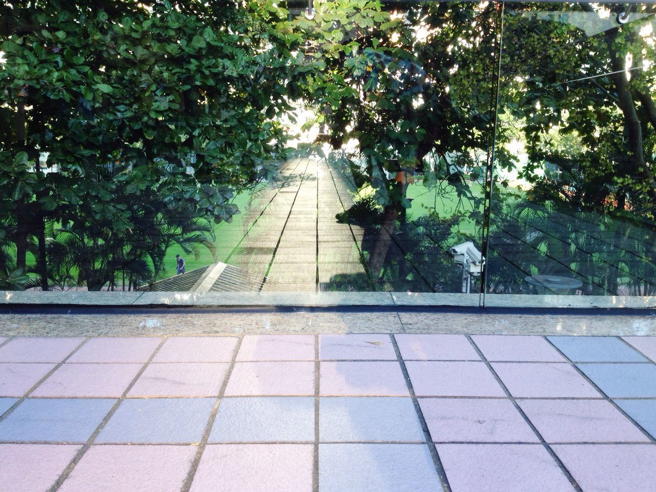 tree, nature, growth, plant, no people, walkway, outdoors, day