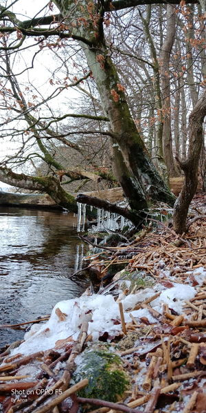 Tree Nature Day Water Outdoors Winter Lake No People Cold Temperature Beauty In Nature Frozen