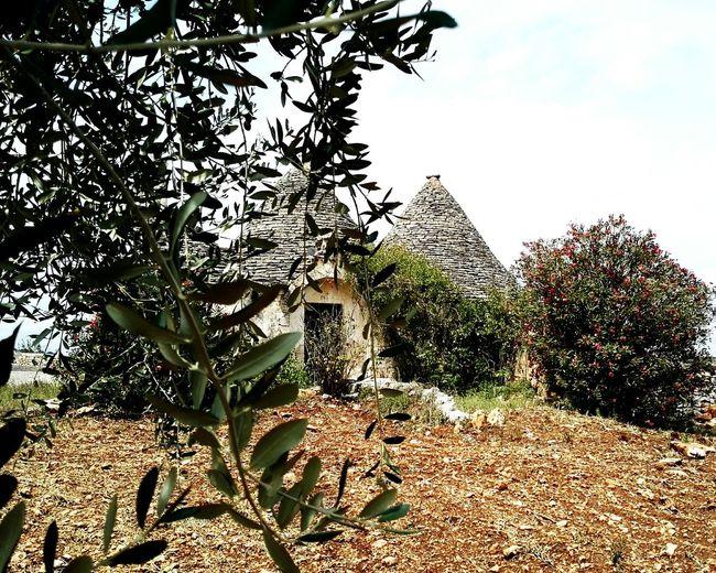 Trulli Houses Trullilovers Trulli Alberobello Alberobellophotocontest Alberobellocity Alberobello - Puglia