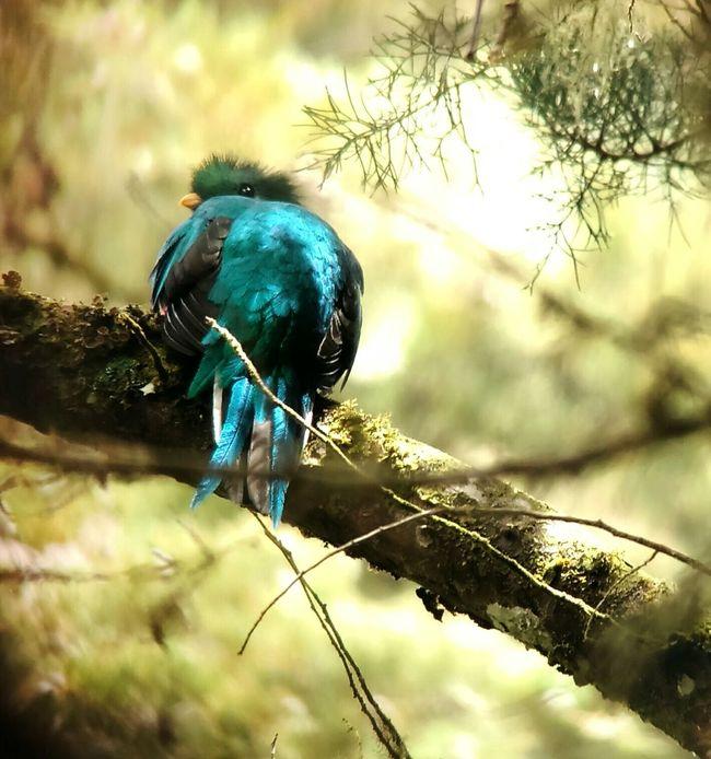 Nature_collection Animal_collection Animal Photography Animal Nature Photography Bird Bird Photography Birds Quetzal
