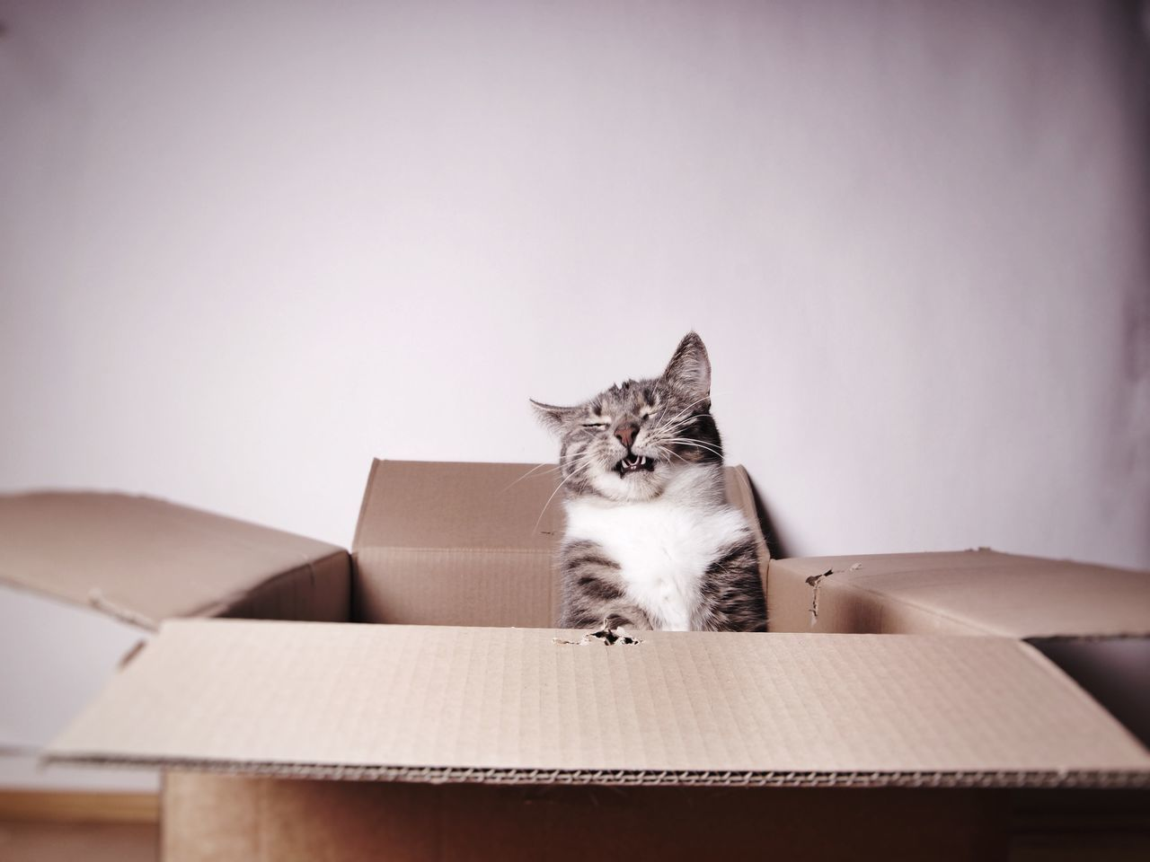 Beautiful stock photos of funny animal, Animal Themes, Box - Container, Cardboard Box, Day