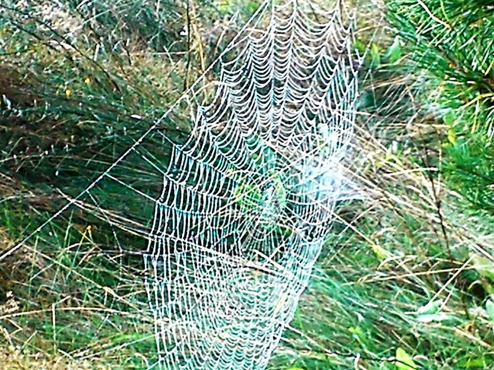 Grass No People Nature Day Outdoors Spider Web Full Frame Close-up Plant Beauty In Nature Backgrounds Fragility Web