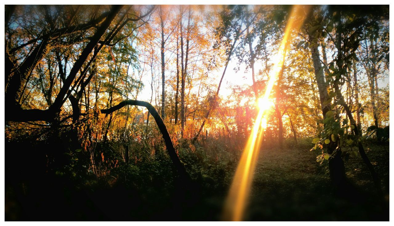 Sunlight Through Trees Sunlight Through Leaves Sun Through Trees