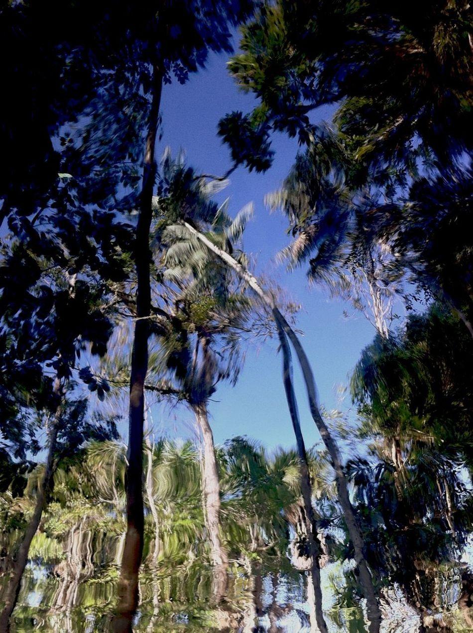 Nature Water Reflections Somewhere Estrada de Novo Airão km7- Manacapuru