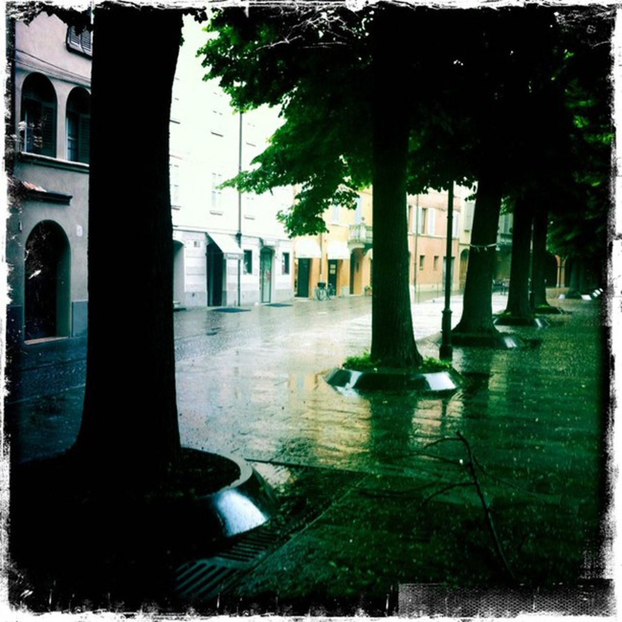 no people, architecture, outdoors, tree, puddle, day
