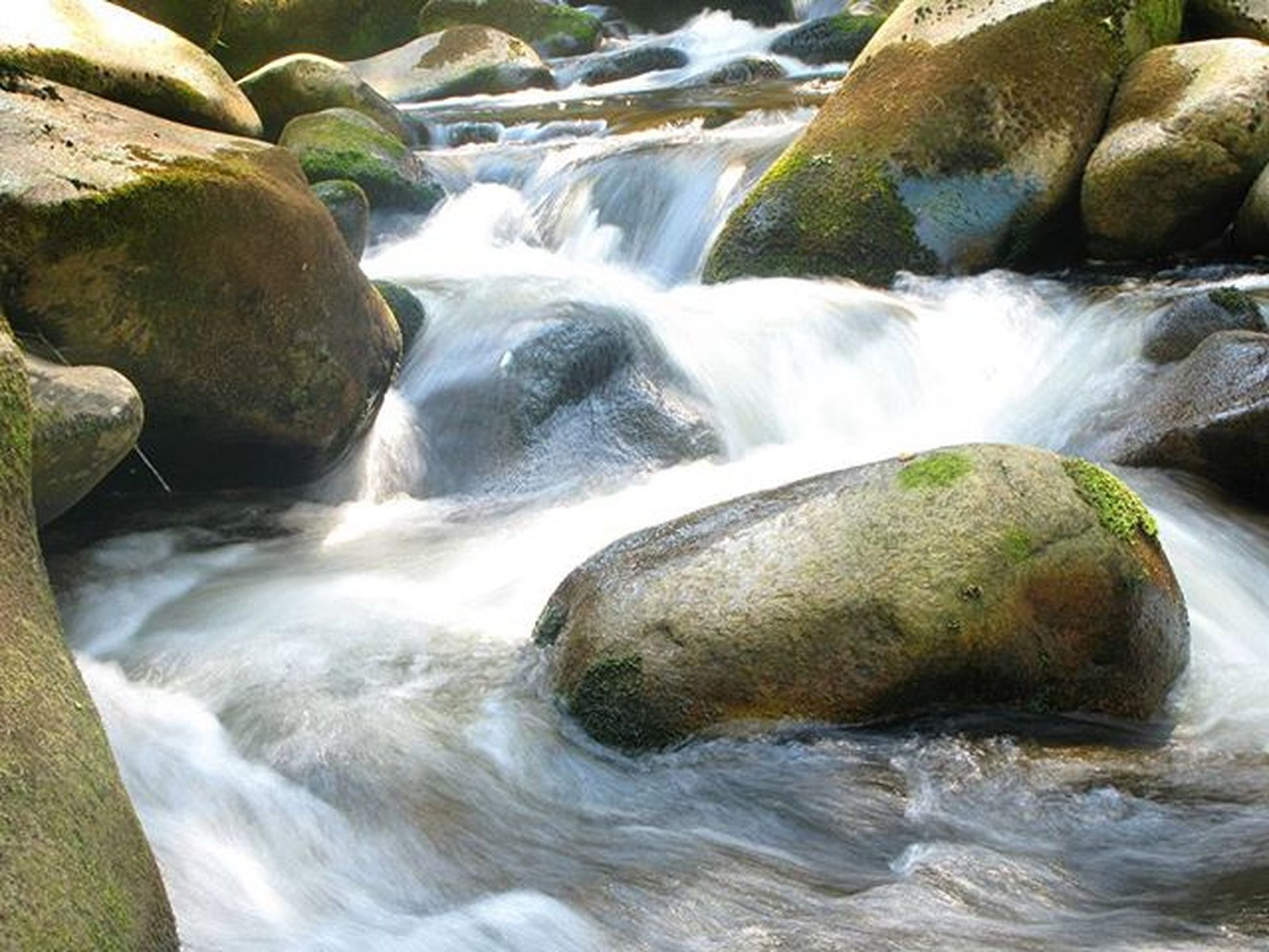 The river Vydra 🐟 River Czechrepublic Czech Šumava Kasperky Kasperskehory Vydra Stones Water Wild Nature Wildlife Wildlifephotography Forest Photooftheday Marvelshots Photo
