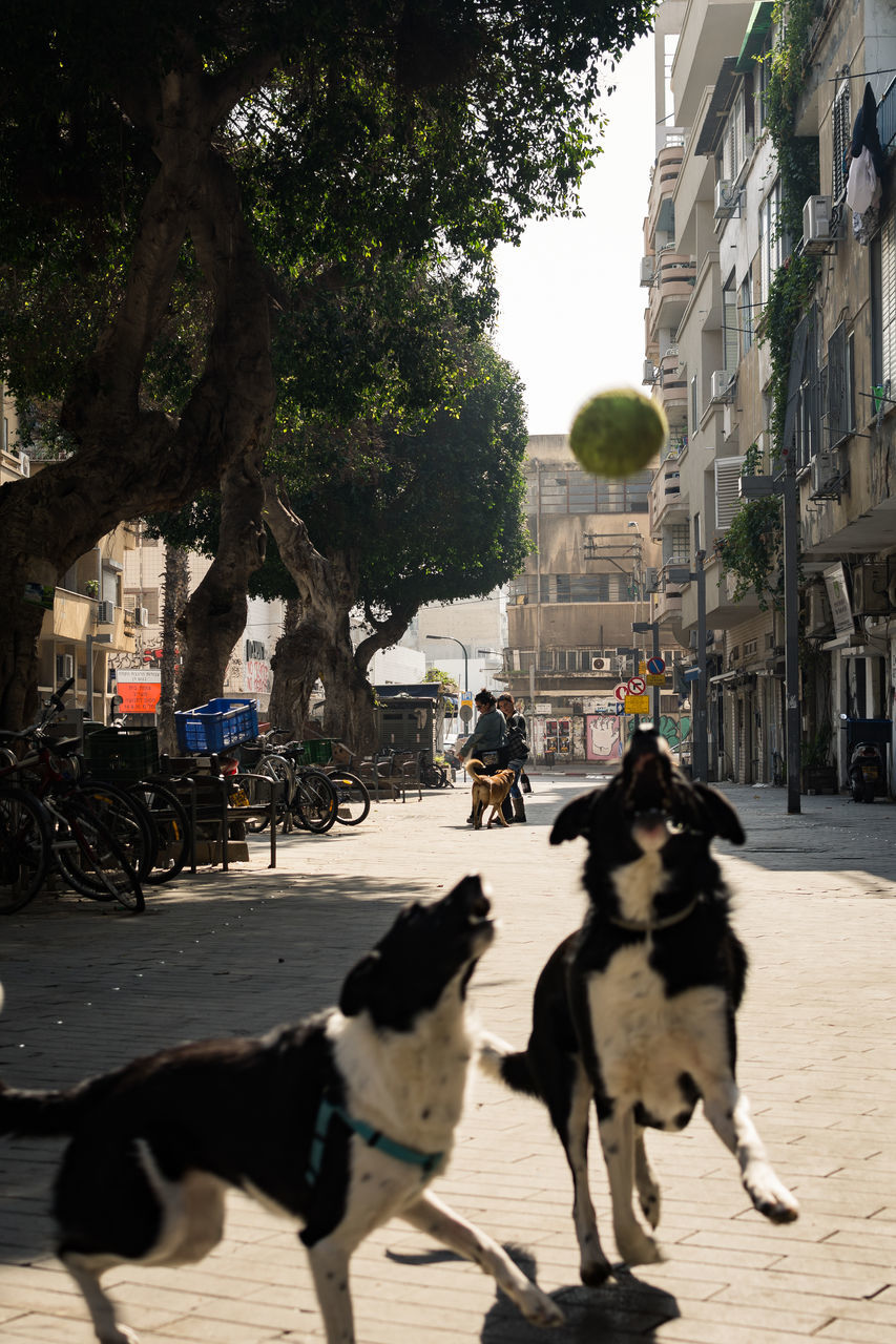 domestic animals, pets, one animal, building exterior, built structure, street, dog, architecture, mammal, tree, incidental people, city, outdoors, day, real people, city street, mode of transport, walking, sunlight, shadow, land vehicle, road, people in the background, full length, men, people