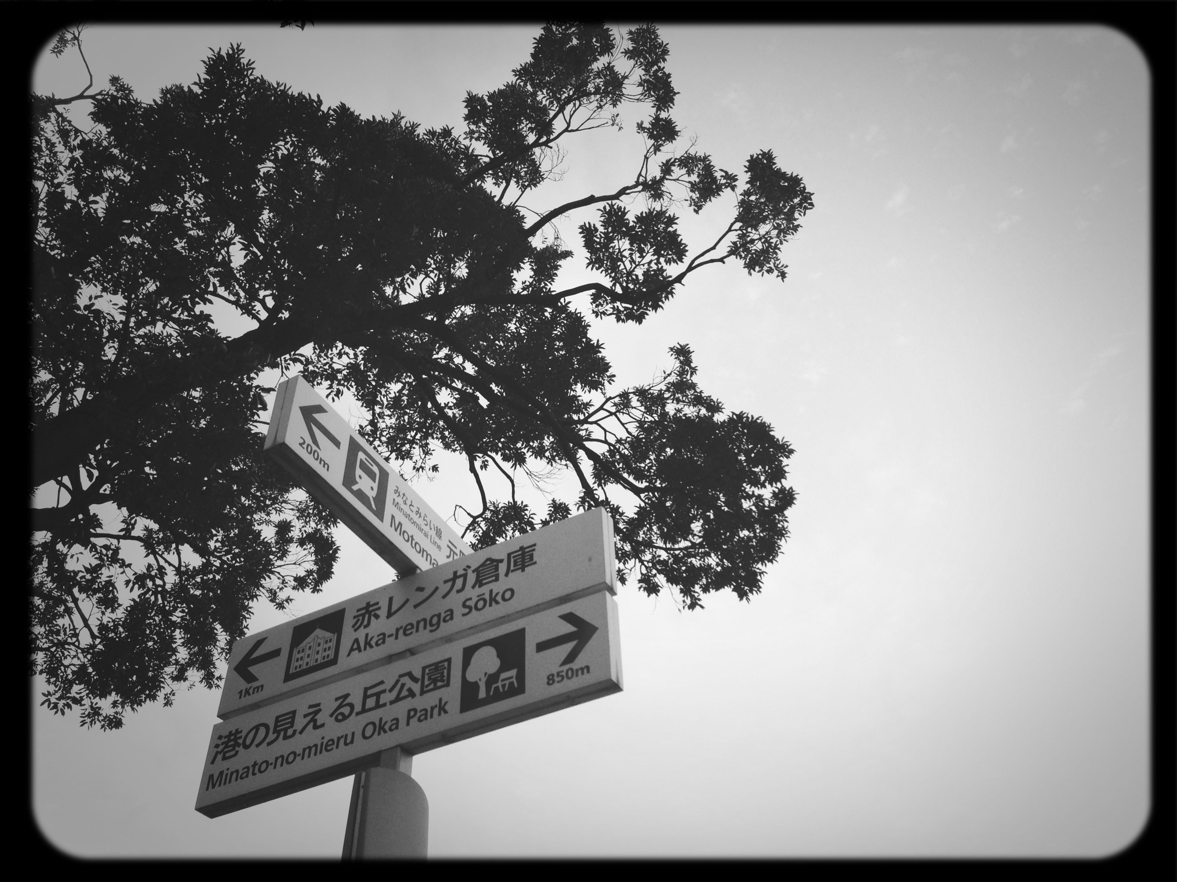 text, low angle view, tree, communication, western script, information sign, sign, guidance, road sign, sky, information, transfer print, auto post production filter, arrow symbol, directional sign, clear sky, capital letter, day, branch, no people