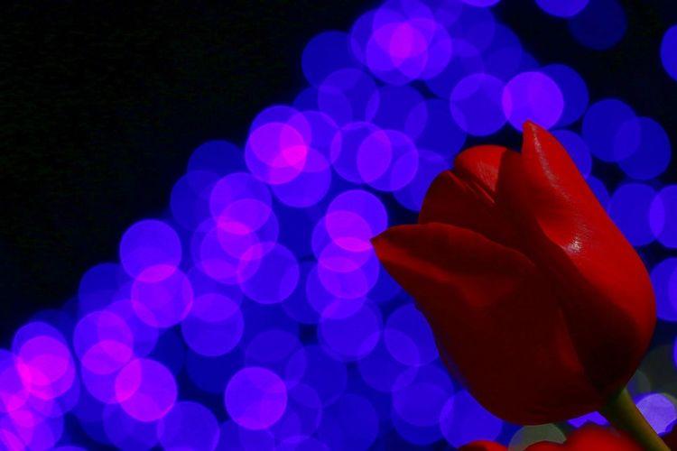 close……🔒 少しお休みします🙇⤵すぐに戻るかもですが……(^^; 江ノ島ウィンターチューリップ 江ノ島サムエル・コッキング苑 Night EyeEm Gallery EyeEm Best Shots Beauty In Nature Light And Shadow ファインダー越しの私の世界 Low Angle View 写真撮ってる人と繋がりたい 写真好きな人と繋がりたい Canon EOS 70D Enjoying Life Flower Flower Head Kanagawa,japan