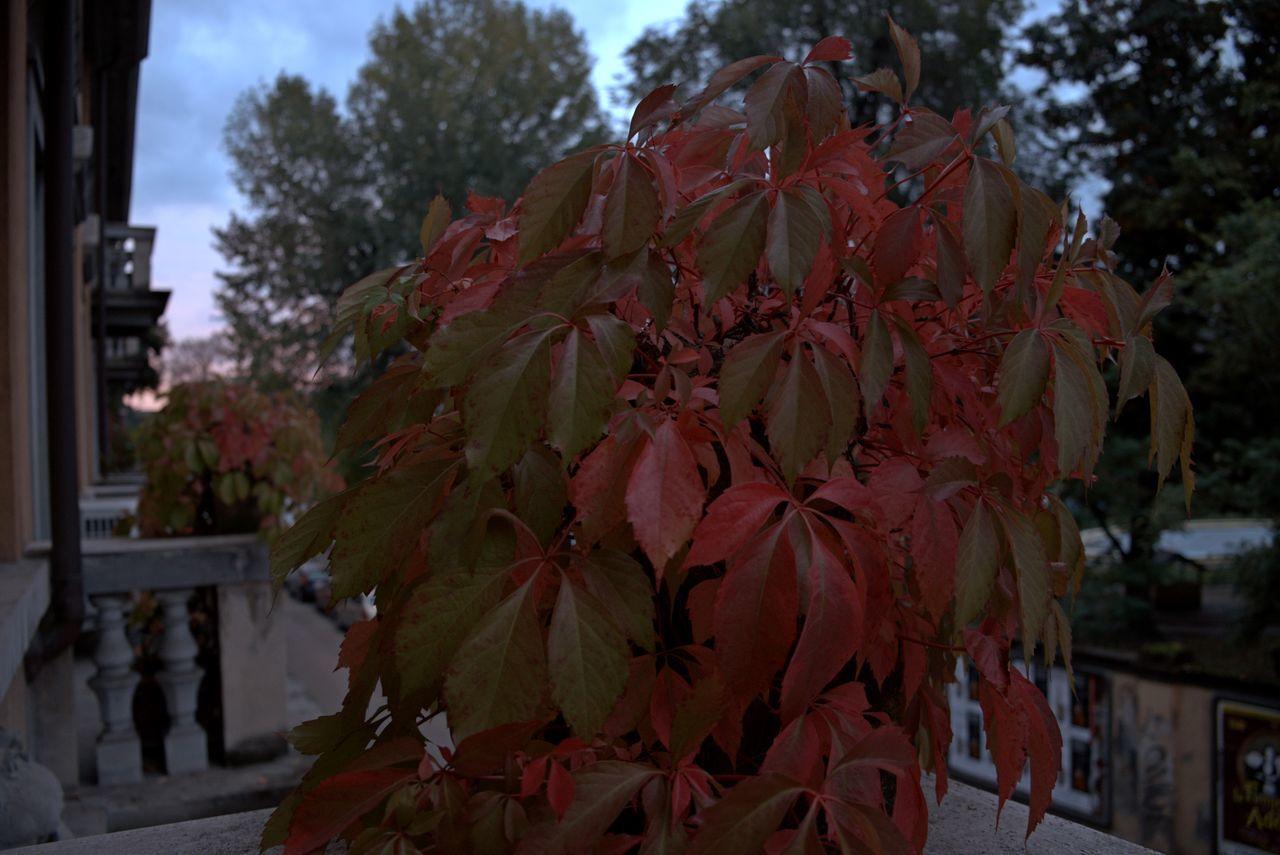 Colours of Autumn On My Balcony Autumn Colors