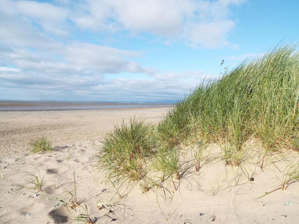 Sand Marram Grass Fleetwood Beach