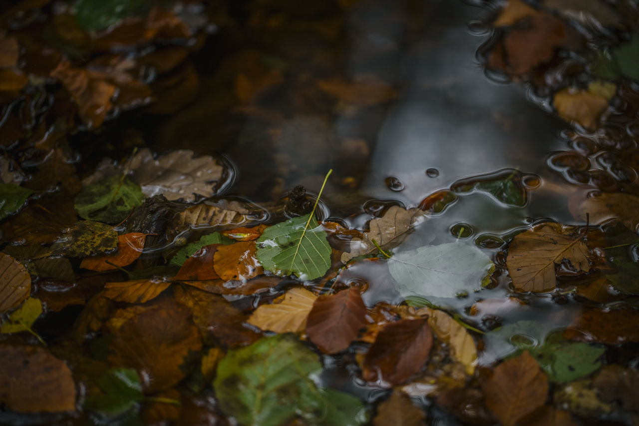 Autumn Autumn Autumn Colors Autumn Leaves Autumn🍁🍁🍁 Beauty In Nature Close-up Foliage Foliage, Vegetation, Plants, Green, Leaves, Leafage, Undergrowth, Underbrush, Plant Life, Flora Leaf Leafs Leaves Leaves🌿 Nature Water Water Reflections Water Surface