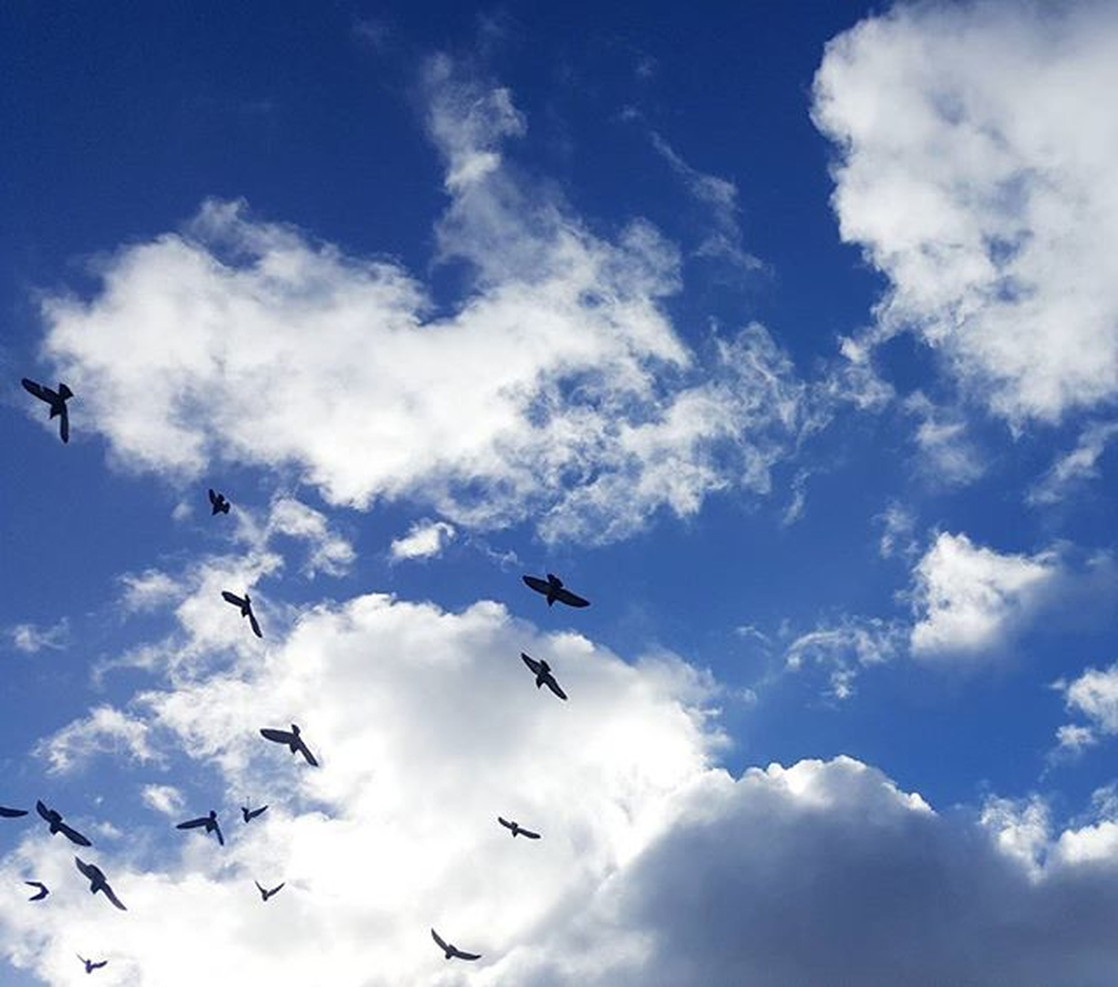 flying, low angle view, bird, sky, mid-air, animal themes, cloud - sky, animals in the wild, wildlife, blue, flock of birds, cloud, nature, cloudy, beauty in nature, freedom, spread wings, day, outdoors
