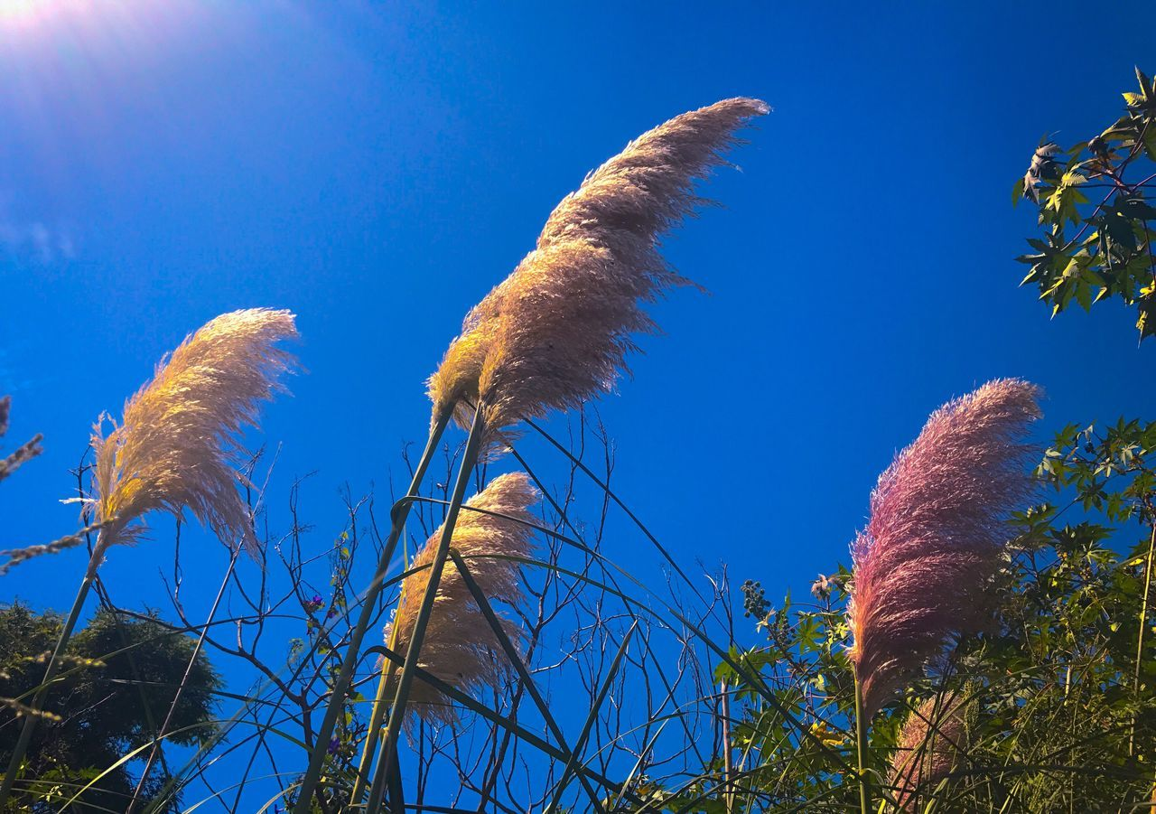 Spikes Fuzzy Plants Sky Blue Sky Nature Blue Growth Beauty In Nature Plant No People Plants Ecological Reserve Day Close-up Outdoors Sun Rays Sunbeam