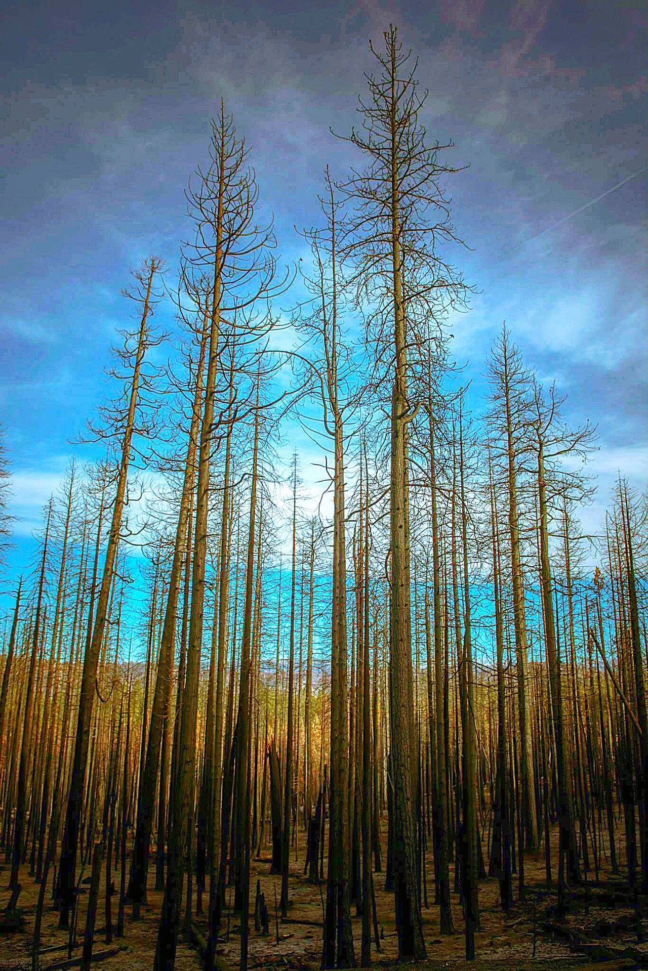 Forest Forest Photography Forest Trees Forest Fire Trees Hightrees Nature Nature_collection Nature Photography Naturelovers Taking Photos Relaxing Enjoying Life Pure AirePuro Mountain